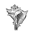 angular murex conch hand drawn ink pen sketch vector image