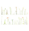 wild grass and dry medical herbs and flowers hand vector image
