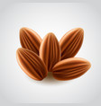 almonds nuts isolated vector image vector image