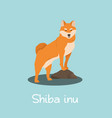an depicting shiba inu dog cartoon vector image