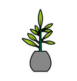 office plant isolated icon vector image