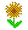 pixelated sunflower icon vector image