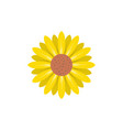 sunflower flower icon design template isolated vector image vector image
