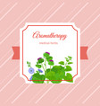 aromatherapy medical herbs label design vector image vector image