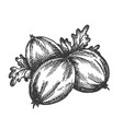 berry hand drawn sketch fruit vector image vector image