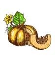 hand drawn sketch pumpkin leaves flowers vector image vector image