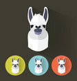 llama portrait with flat design vector image vector image