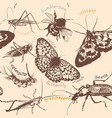 seamless wallpaper pattern with detailed insects vector image