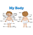 vocabulary part of body vector image