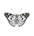 butterfly isolated on blank background vector image vector image