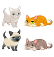 group cute cats with different colors vector image vector image