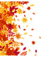 Autumn falling leaves nature background with red