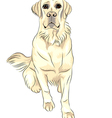 sketch dog breed white labrador retrievers vector image vector image