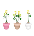 Yellow Roses in Three Ceramic Flower Pots vector image vector image