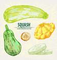 digital detailed line art color squash vector image vector image