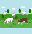 domestic goats graze in a meadow in summer vector image vector image