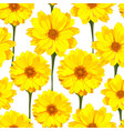 seamless pattern with chrysanthemums flowers vector image