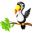 Toucan cartoon vector image vector image