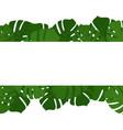 tropical monstera leaves frame vector image