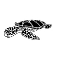 Black and white isolated sea turtle