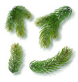 christmas tree branches set for a christmas decor vector image