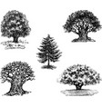 drawings of different trees vector image