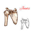 joint and bone of human shoulder isolated sketch vector image vector image