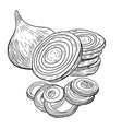 onion hand drawn full rings and half vector image