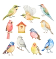 watercolor set birds vector image vector image