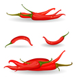 collection red chili pepper vector image