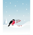 bullfinch bird on winter background vector image