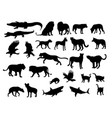 carnivora animal silhouettes vector image