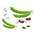 Cartoon fresh beans vegetable characters vector image vector image