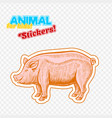 farm animal pig or pork in sketch style on vector image