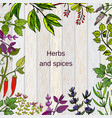 frame with hand drawn culinary herbs and spices vector image vector image