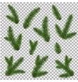green fur-tree branch vector image
