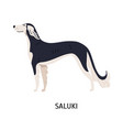 saluki gorgeous lovely dog of hunting breed vector image vector image