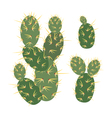 Simmple Cactus collection isoleted on white vector image vector image