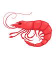 red shrimp cartoon vector image