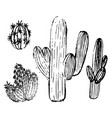 a set of cactus sketches vector image