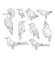 birds set lined collextion vector image