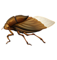 Cicadidae vector image