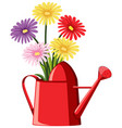 colorful flowers in red watering can vector image vector image