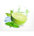 fresh lime with leaves of mint vector image vector image