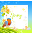 spring frame with cherry blossom flower robin vector image