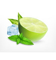 fresh lime with leaves of mint vector image