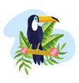 toucan with tropical plants leaves in the summer vector image vector image