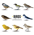 birds collection sandpiperswallowtrush vauxs-swift vector image