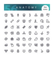 anatomy of the human body line icons set vector image