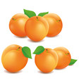 fresh apricot fruits isolated on white background vector image vector image